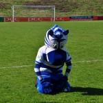 1. Bundesliga 2014/15: MSV Duisburg – Herforder SV